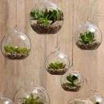 Le piante che arredano il bagno: Mini-Terrarium